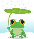 Cute frog in the rain use lotus leaf to resist Stock Photography