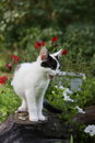 Cute funny kitten sitting near the flower bed red Stock Image