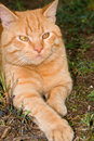 Cute ginger cat lying outdoors Royalty Free Stock Photo