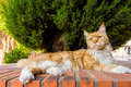 Cute ginger cat lying outdoors in shadow of the plant Royalty Free Stock Photos