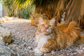 Cute ginger cat lying outdoors in shadow of the plant Stock Images