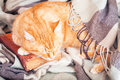 Cute ginger cat sleeping on a book