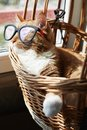 Cute ginger cat wearing glasses, sitting in a basket and resting on the sun Royalty Free Stock Photo