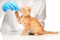Cute ginger kitten getting a pill from veterinarians hand