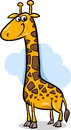 Cute giraffe cartoon illustration of african animal Royalty Free Stock Photography