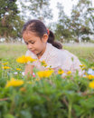 A cute girl on a field behind yellow flowers Stock Photo