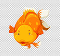 Cute goldfish swimming on transparent background Royalty Free Stock Photo