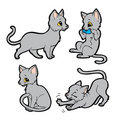 Cute gray cat Stock Photos