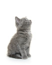 Cute gray kitten baby american shorthair on white background Royalty Free Stock Photo