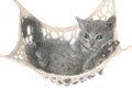 Cute gray kitten lying in hammock on a white background Royalty Free Stock Photos