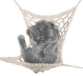 Cute gray kitten sleeping in hammock top view on white background Stock Photo