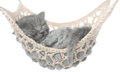 Cute gray kitten sleeping in hammock on white background Stock Photography