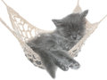 Cute gray kitten sleeping in hammock on white background Royalty Free Stock Photography