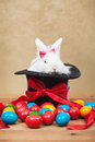Cute but grumpy easter bunny with colorful dyed eggs sitting in magician hat Royalty Free Stock Photos
