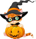 Cute halloween kitten red tabby with pumpkin Stock Photos