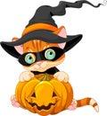 Cute Halloween Kitten