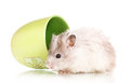 Cute hamster in cup Stock Photography