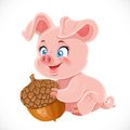 Cute happy baby pig holding a large acorn Royalty Free Stock Image