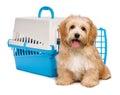 Carino felice cane seduta prima gabbia