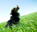 A cute, healthy dog on the field Royalty Free Stock Photo