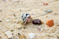 Cute hermit crab walking around on a sandy beach Royalty Free Stock Photo