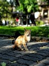 Cute homeless cats on the sidewalk in a city with blurred background