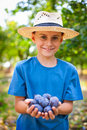 Cute kid with a handful of plums Stock Photo