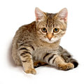 Cute kitten. Royalty Free Stock Image