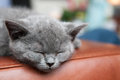 Cute kitten asleep Royalty Free Stock Photo