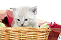 Cute kitten in a basket Royalty Free Stock Image