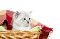 Cute kitten in a basket Royalty Free Stock Photos