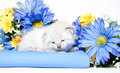 Cute kitten with basket and flowers Royalty Free Stock Photography