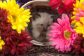 Cute kitten in basket surrounded by flowers Royalty Free Stock Photography