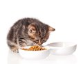 Cute kitten with bowl for a forage over white background Royalty Free Stock Photo