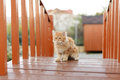 Cute Kitten on Bridge Stock Photo