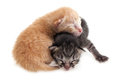 Cute kitten brown and black kittens on white background Royalty Free Stock Photography