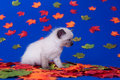 Cute kitten and fall leaves Royalty Free Stock Photography