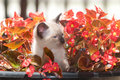 Cute kitten in flower pot Royalty Free Stock Photography