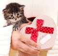 Cute kitten fluffy in the gift bag in the form of the heart on humans hands Stock Photos