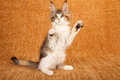Cute kitten on hind legs Stock Photography