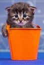 Cute kitten little in the garden bucket over blue backgroud Royalty Free Stock Image