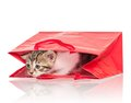Cute kitten little in a gift bag isolated on white background Stock Photo