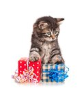 Cute kitten little with the gifts isolated on white background Stock Photography