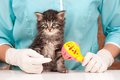 Cute kitten little in hands at the veterinarian over white background Royalty Free Stock Photography