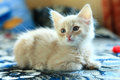 Cute kitten little light red lying down Stock Photo