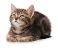Cute kitten little lying over white background cutout Royalty Free Stock Image