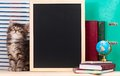 Cute kitten little with school accessories and black blank board for your text Royalty Free Stock Image