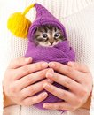 Cute kitten little on a woman hands on white background Stock Photos