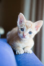 Cute kitten looking curious into the lens Stock Photo
