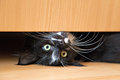 Cute kitten lying under drawer of wardrobe Royalty Free Stock Images